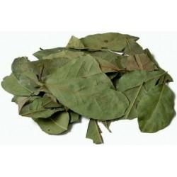 Te hojas de laurel secas infusion comprar precio herbolariomalvarosa.com Laurel seco